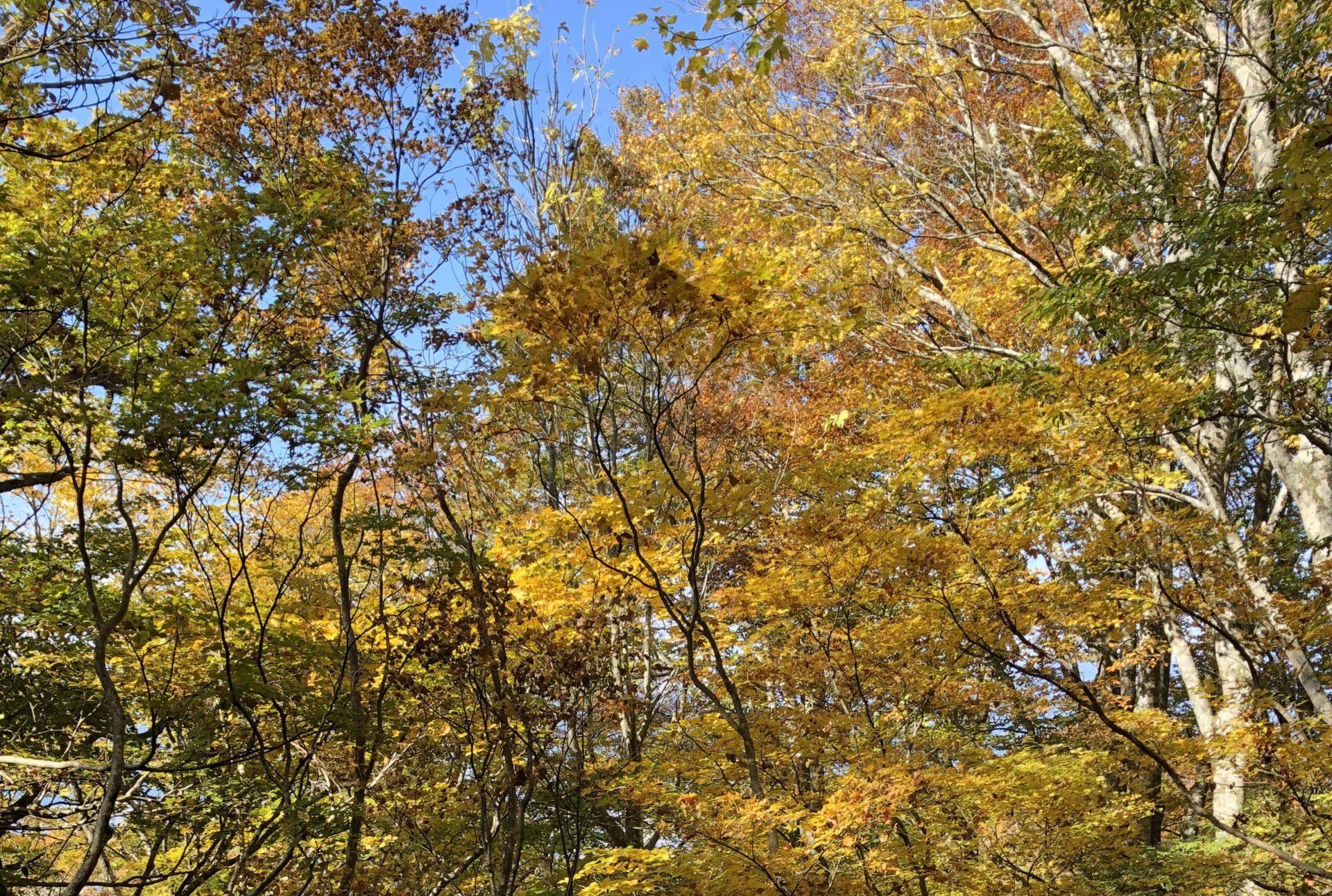 秋の荒島岳は予想以上だった